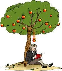Image result for apple falling from a tree newton