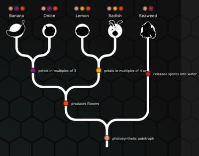Introduction to Evolution | Sutori