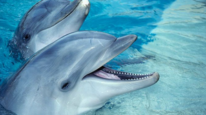 Dolphin Evolution   Sutori